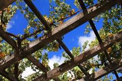 Wijngaard Napa in Californië. Royalty-vrije Stock Afbeeldingen