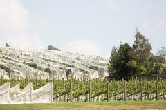 Wijngaard noordelijk Tasmanige stock fotografie