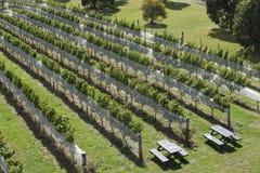 Wijngaard NZ Royalty-vrije Stock Foto