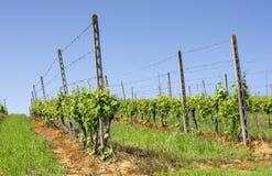 Wijngaard onder een blauwe Hemel royalty-vrije stock foto's