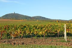 Wijngaard onder heuvellandschap Stock Afbeelding