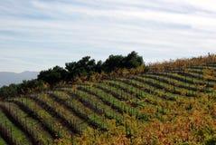 Wijngaard op de heuvel van Californië stock foto