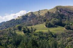 Wijngaard op de heuvels van Sonoma-Provincie, Sugarloaf Ridge State Park, Californië royalty-vrije stock foto