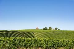 Wijngaard op het Meer van Konstanz royalty-vrije stock foto