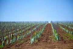 Wijngaard in Roemenië Royalty-vrije Stock Afbeeldingen