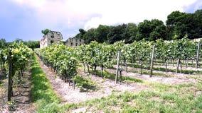 Wijngaard in Ruïnes onder Blauwe Hemel stock fotografie