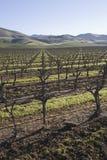 Wijngaard in Santa Maria California Royalty-vrije Stock Afbeelding