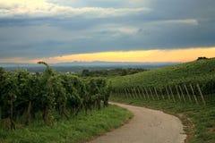 Wijngaard in Schwarzwald Royalty-vrije Stock Afbeeldingen
