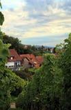 Wijngaard in Schwarzwald Stock Foto's