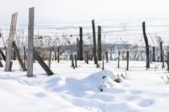 Wijngaard in sneeuw Royalty-vrije Stock Fotografie