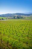 Wijngaard in Sonoma, Californië. stock foto's