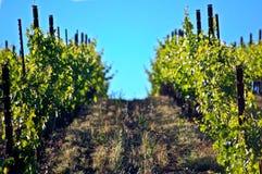 Wijngaard in Sonoma-Vallei stock fotografie