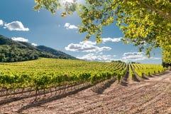 Wijngaard, Spanje Stock Afbeeldingen