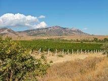Wijngaard tegen bergen in de oostelijke Krim in September Stock Foto