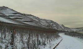 Wijngaard-terrassen met Sneeuw Stock Fotografie