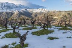 Wijngaard tijdens de Winter Royalty-vrije Stock Foto's
