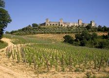 Wijngaard in Toscanië stock foto's