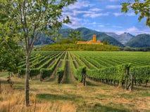 Wijngaard in Toscanië, Italië Stock Foto