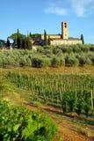 Wijngaard in Toscanië, Italië Royalty-vrije Stock Foto's
