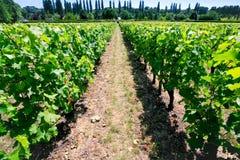 Wijngaard in Val de Loire, Frankrijk Royalty-vrije Stock Afbeeldingen