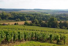 Wijngaard van de hellingen van Chablis royalty-vrije stock afbeeldingen
