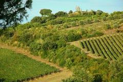Wijngaard van Druiven Royalty-vrije Stock Afbeeldingen