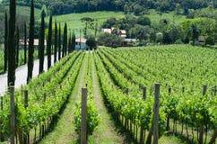 Wijngaard van druiven in Dos Vinhedos van het Dal in Bento Gonçalves, royalty-vrije stock afbeelding