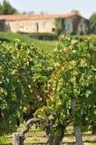 Wijngaard van Zuidwestenfrankrijk stock foto