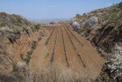 Wijngaard voor de productie van rode en witte wijnen in het gebied van Andalusia Royalty-vrije Stock Foto