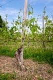 Wijngaard Wijnbouw dichtbij Barolo, Langhe, Piemonte, Itali?, Unesco-erfenis Dolcetto, de rode wijn van Nebbiolo Barbaresco royalty-vrije stock foto's