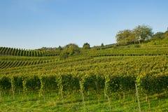 Wijngaard zuidelijk Duitsland, bergweg, heppenheim, bensheim Royalty-vrije Stock Afbeeldingen