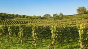 Wijngaard zuidelijk Duitsland, bergweg, heppenheim, bensheim Royalty-vrije Stock Fotografie