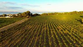Wijngaard in zuidelijk Frankrijk stock video