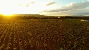 Wijngaard in zuidelijk Frankrijk stock footage