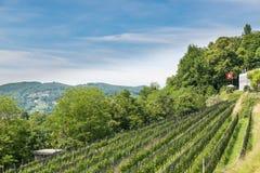 Wijngaard in Zwitserland royalty-vrije stock foto