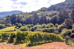 wijngaarden stock afbeeldingen