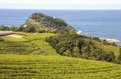 wijngaarden royalty-vrije stock foto