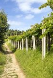 wijngaarden stock fotografie