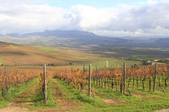 Wijngaarden Royalty-vrije Stock Afbeeldingen