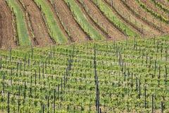 Wijngaarden 5 Royalty-vrije Stock Afbeeldingen
