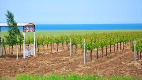 wijngaarden Stock Foto
