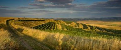 Wijngaarden in augustus royalty-vrije stock foto