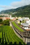 Wijngaarden bij Kasteel Grande, Bellinzona, Zwitserland royalty-vrije stock afbeelding