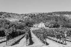 Wijngaarden bij Sonoma-vallei royalty-vrije stock afbeelding
