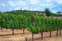 Wijngaarden bij Sonoma-vallei royalty-vrije stock foto's