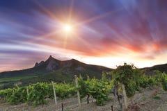Wijngaarden bij zonsondergang royalty-vrije stock foto's