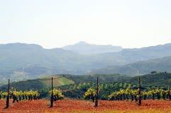 Wijngaarden in bloemen in de campagne Stock Afbeelding