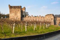 Wijngaarden in Borghetto sul Mincio, met middeleeuwse brug royalty-vrije stock fotografie