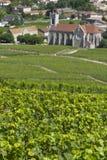 Wijngaarden in Bourgondië, Frankrijk. Royalty-vrije Stock Afbeelding