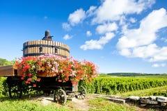 Wijngaarden, Bourgondië, Frankrijk Stock Afbeeldingen